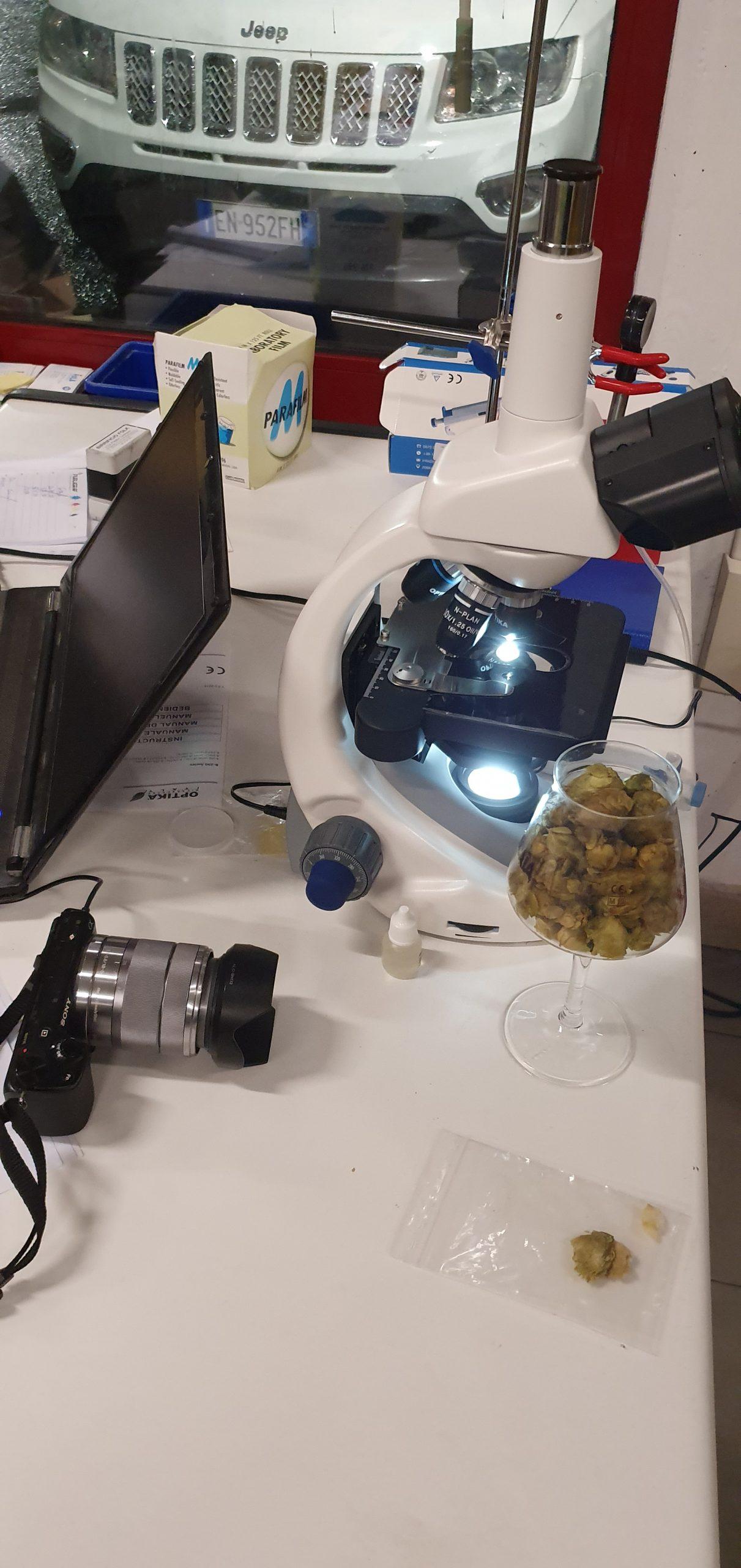 Analisi al microscopio